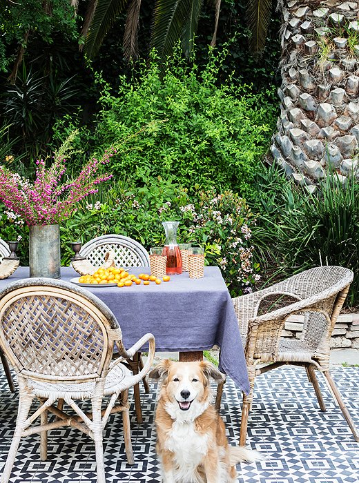 Out on the patio, the couple's dog, Harrison, happily sits on Granada tile they had installed to match the feel of the house.