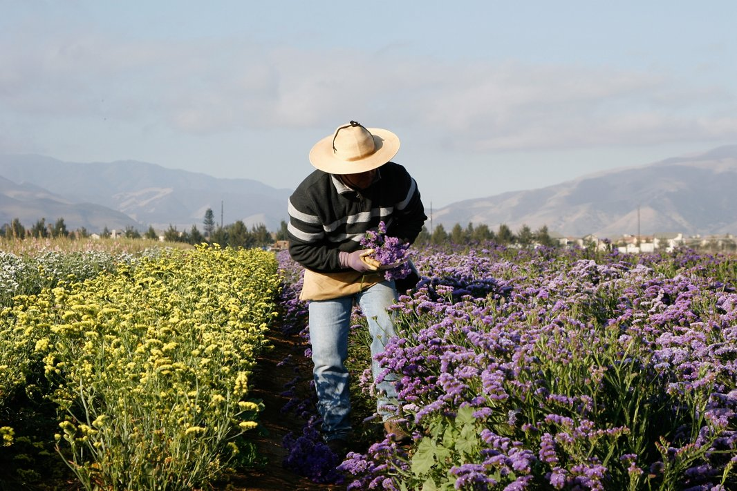 Harvesting flowering herbs at Creekside Farms in California's Salinas Valley. Image courtesy of Creekside Farms.