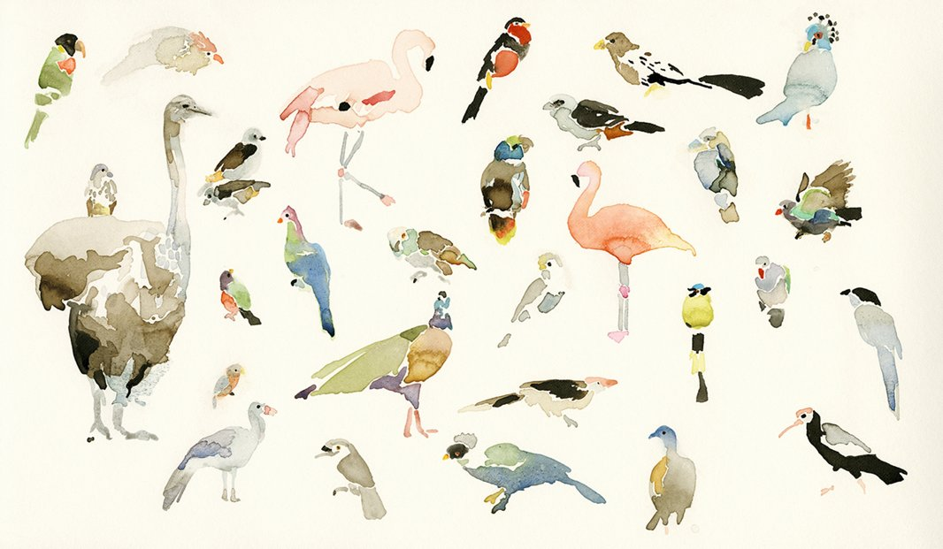 "Bird Chart, ""a crisp, bright watercolor"" depicting birds at the Houston Zoo, is another of Mary's favorite pieces."