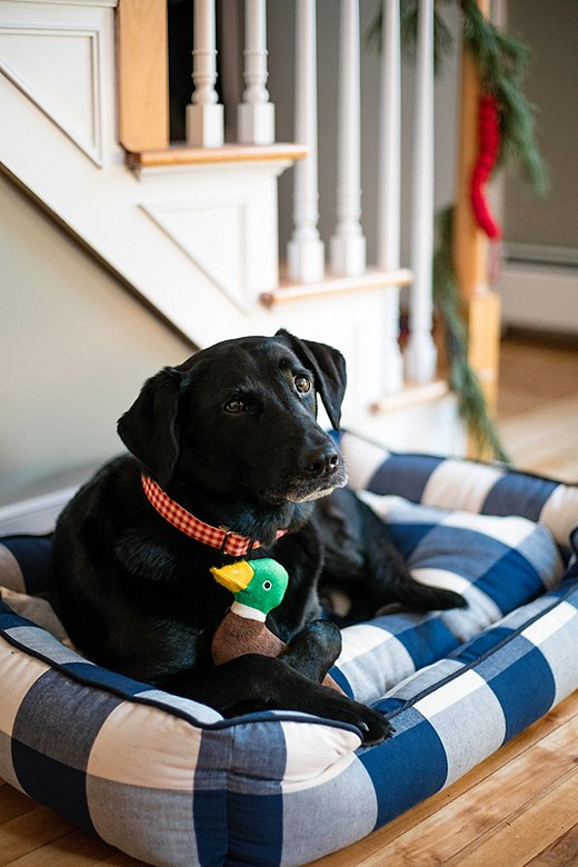 Jackie's adorable black Lab, Poppy, gets in on the gifting action with a buffalo-check pet bed.