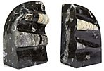Pair of Orthoceras Fossil Bookends