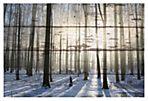Papineau (Reclaimed Wood)
