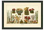 Cacti, 1881