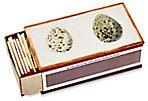 Match Box, Egg