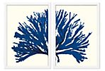Miranda Baker, Blue Coral Diptych