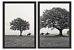Ben Wood, Morning Ride Diptych