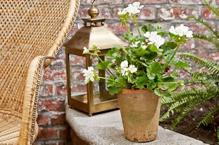Gardening Ideas Plants That Repel Mosquitoes One Kings Lane