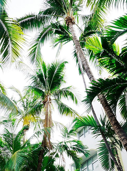 Miami Palms by Natalie Obradovich