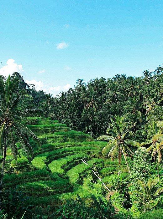 Tegallalang, Bali by Natalie Obradovich