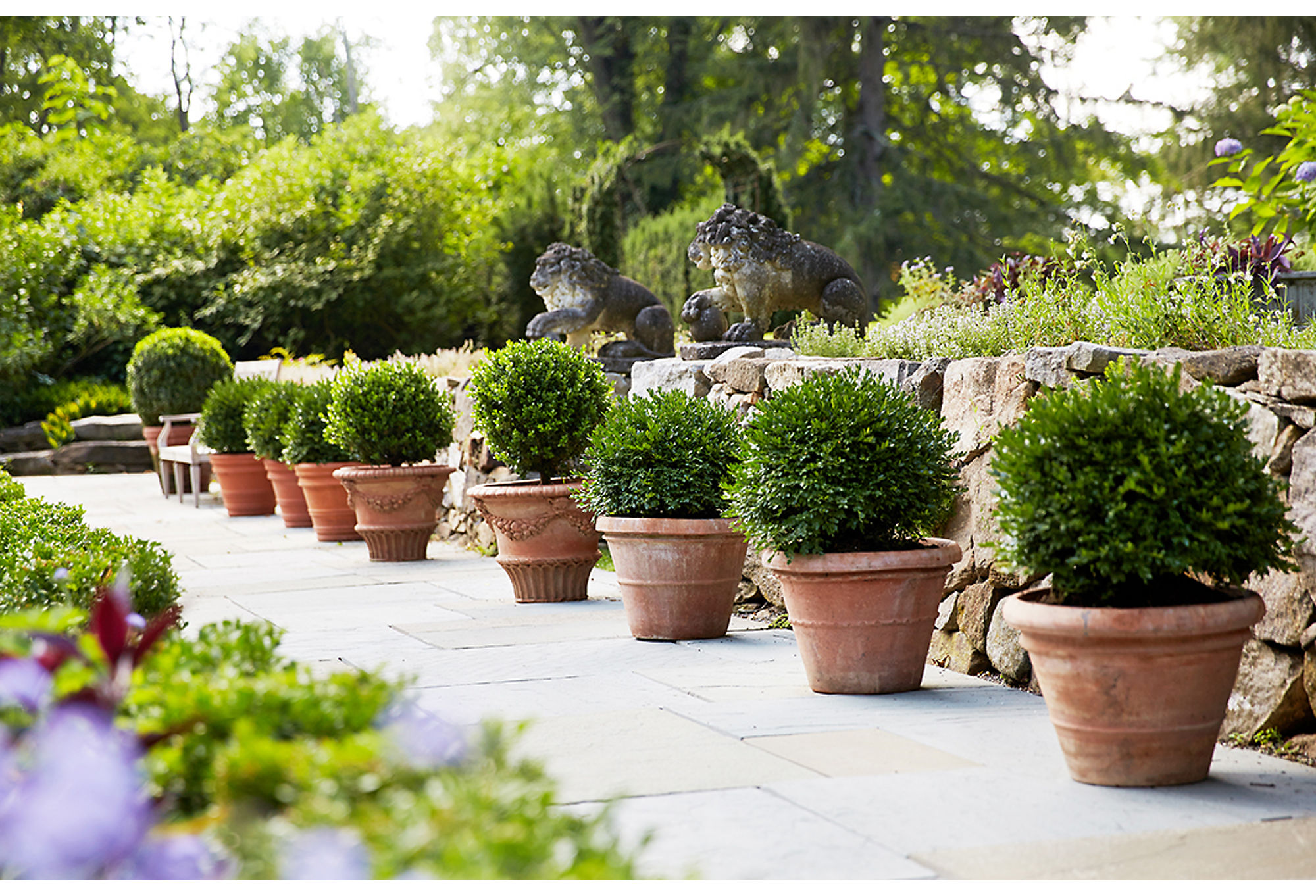 Designer Bunny Williams added a row of terracotta planters filled with boxwood trees to accent her garden design.