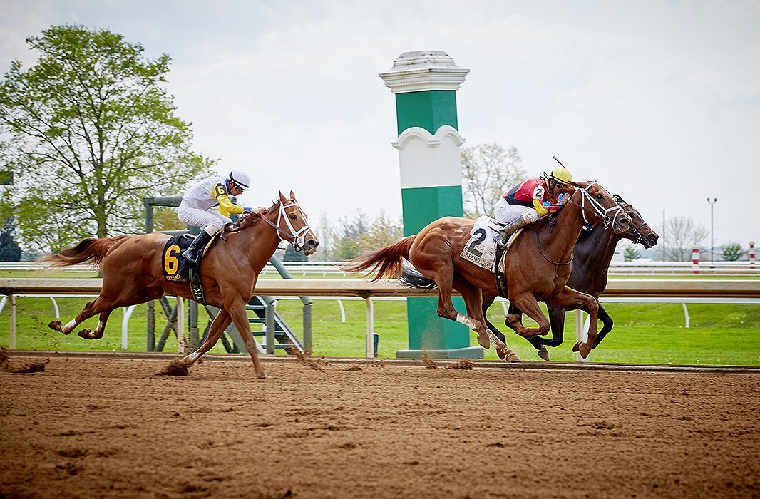 And the race is on as jockeys and their thoroughbreds leap into flight.