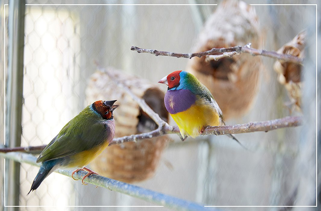 In the living room, an antique aviary houses birds that rise and rest in tandem with the sun.