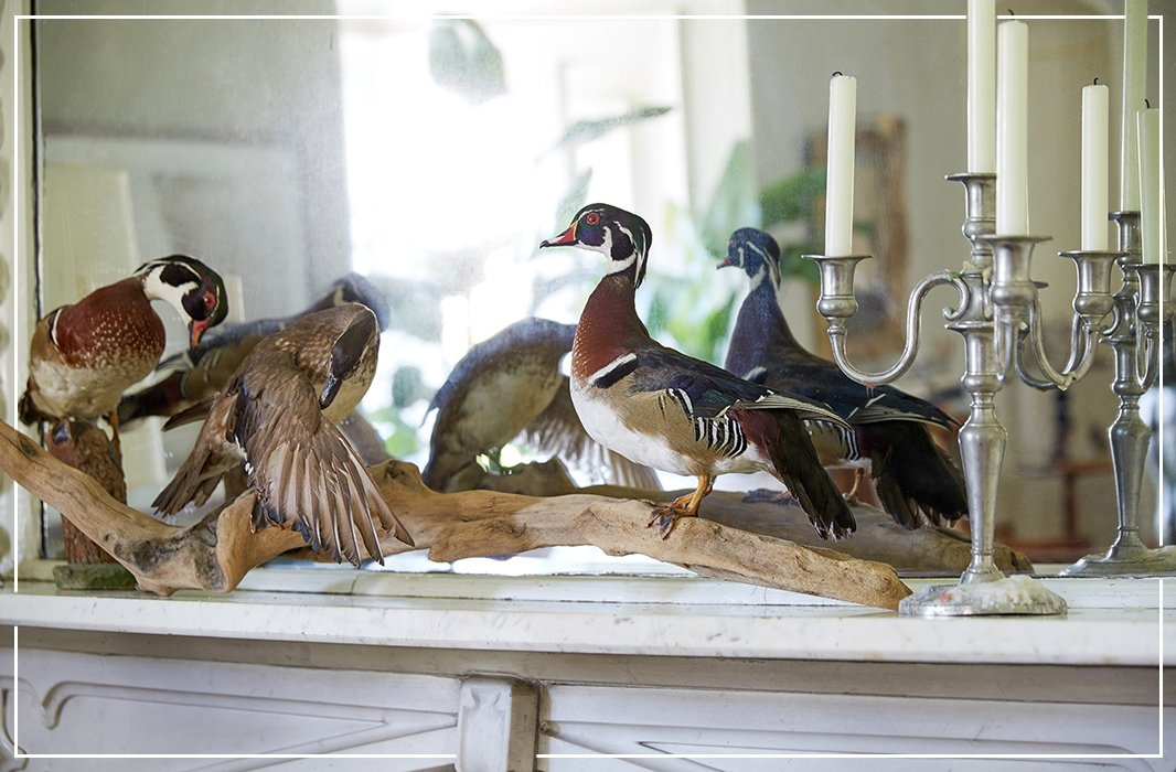 Frozen in time, ducks from Jon's brother grace a mantel not far from where living birds sing.