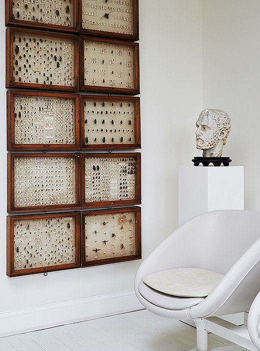 "A 19th-century insect collection reflects Darryl's philosophy for embracing the unusual and the timeless: ""I would encourage anyone to be confident and buy things that they like that will withstand the test of time."""