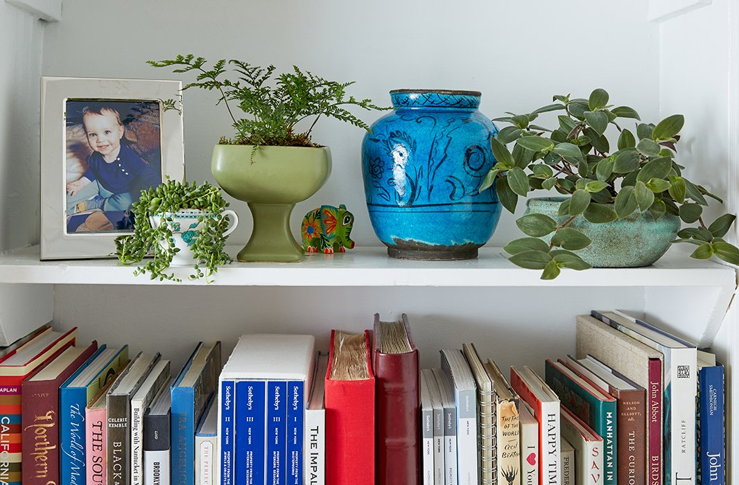 A rabbit's foot fern and a trailing foliage plant called baby bunny bellies (which should be a children's book) now live in the bookshelf, along with sedum placed in a teacup.