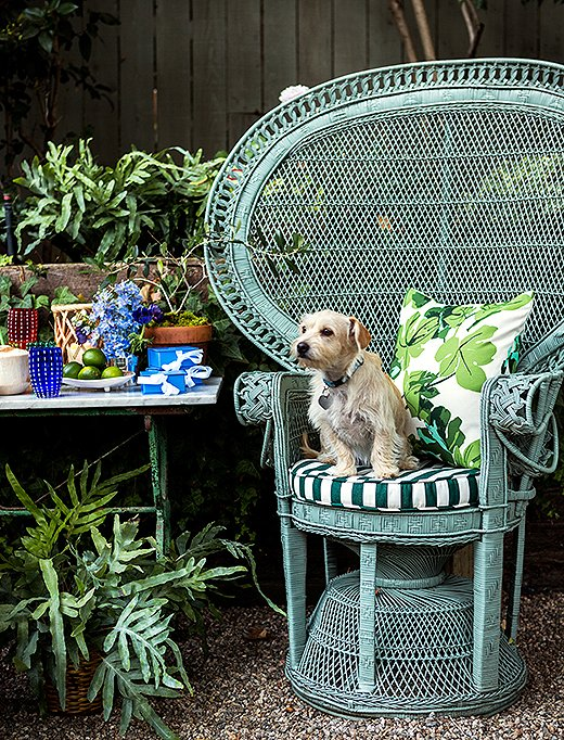 Rebecca's dog, Luna, surveys the party prep from a wicker peacock chair.