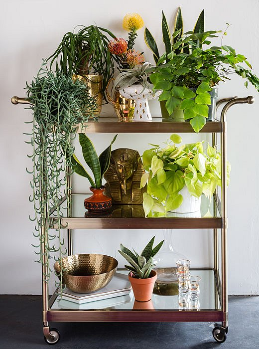 "Justina elevates plants on a bar cart to ""help them reach light better and thrive indoors."""