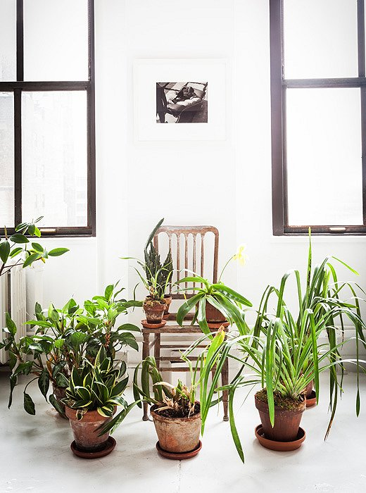A bevy of plants artfully arranged in designer Vicente Wolfe's New York loft. Photo by Lesley Unruh.