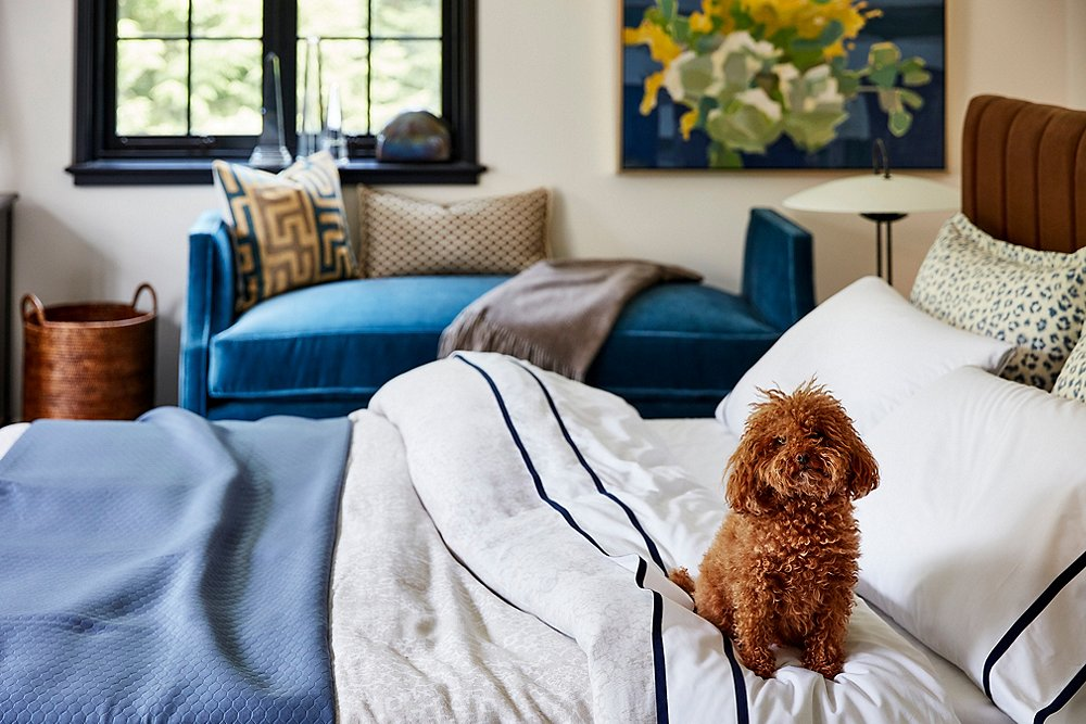 Tips for Creating a Home You and Your Pet Will Love