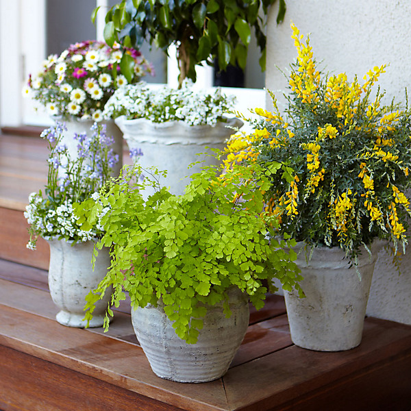 Outside Potted Plant Ideas