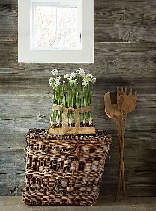 Charmingly rustic vignettes—like paperwhites atop an antique basket—are a GrayBarns signature.