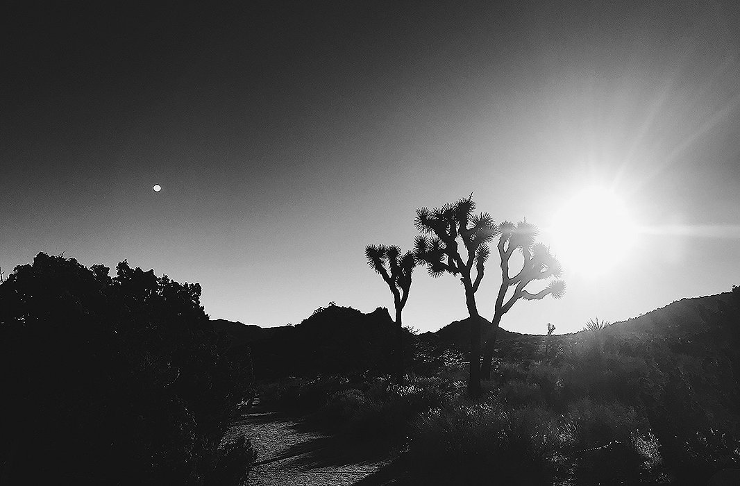 A glimpse of the stark vistas at Joshua Tree is well worth the two-hour drive from downtown Palm Springs.