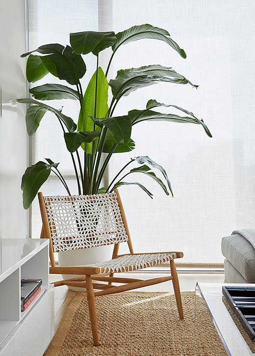 A tall banana leaf plant adds a pop of green to the quiet living room.