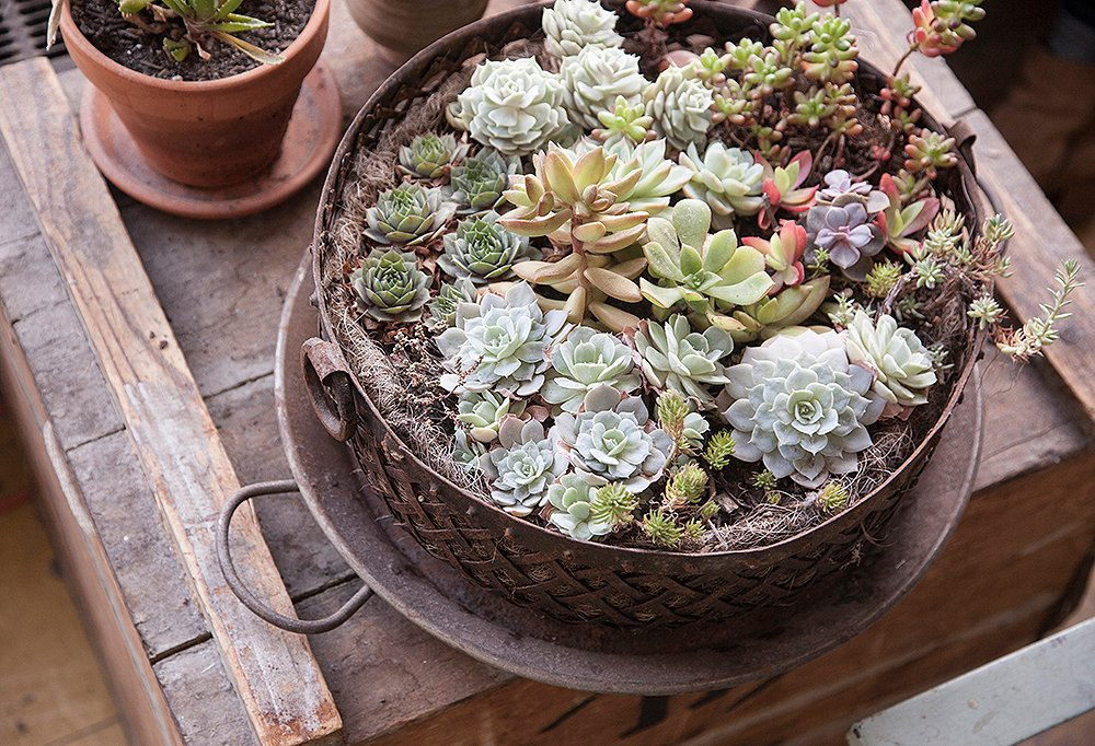 Potted succulents play up the botanical vibe in Mancini's studio. A bonus? They're beautiful and easy to care for.