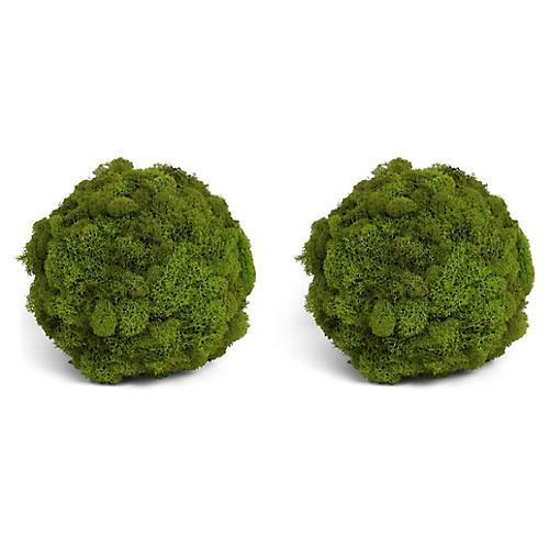 S/2 Reindeer Moss Balls, Dried