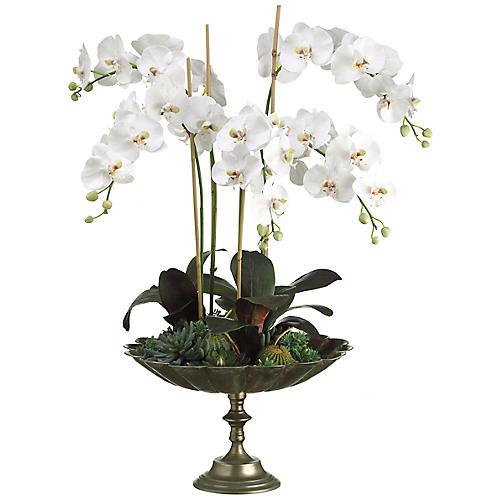 """39"""" Orchid & Succulent Arrangement, Faux"""