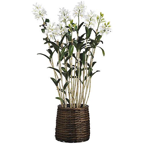 """65"""" Star Cattleya Plant, Faux"""