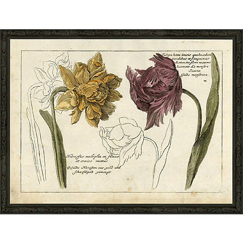 Tulip and Narcissus, 1750