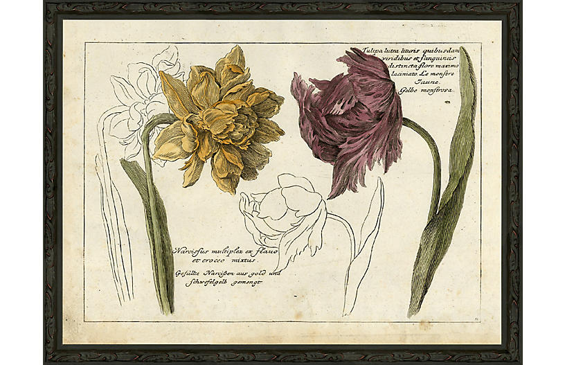 Tulip and Narcissus - 1750