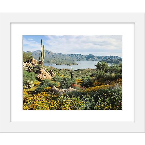 Kevin Russ, Arizona Blooms