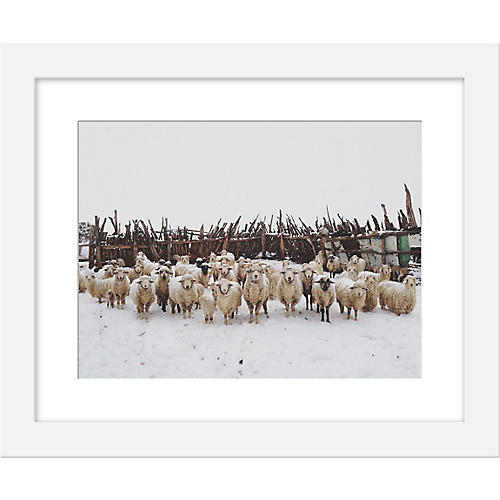 Kevin Russ, Snowy Sheep Stare