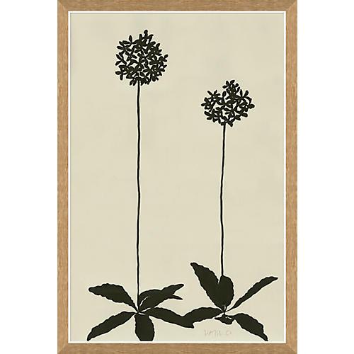 Susan Hable, Allium
