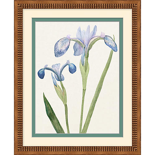 One Kings Lane, Periwinkle Flowers 1