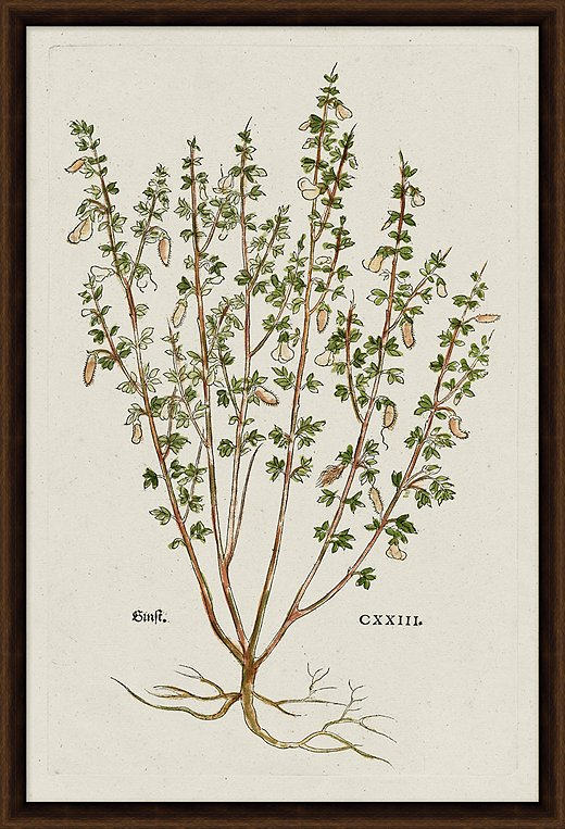 A ready-to-hang reproduction of a vintage botanical print.