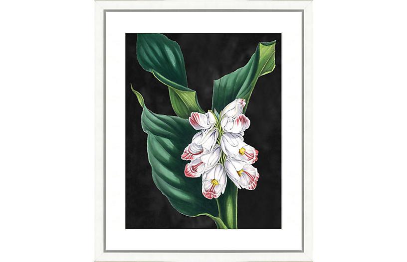 Bold Botanical I
