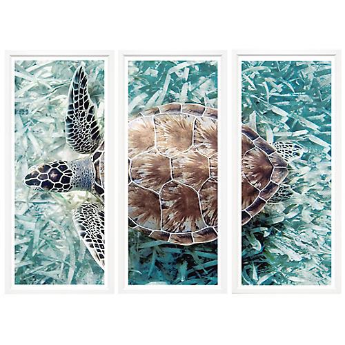 Sea Turtle Triptych