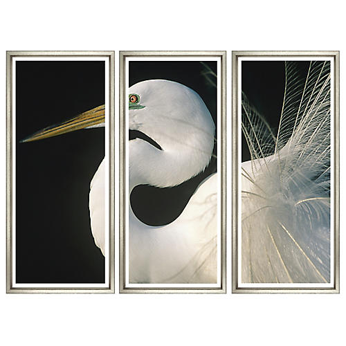 Great Egret Triptych