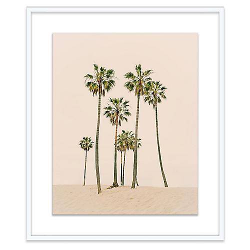 Venice Palms Photograph