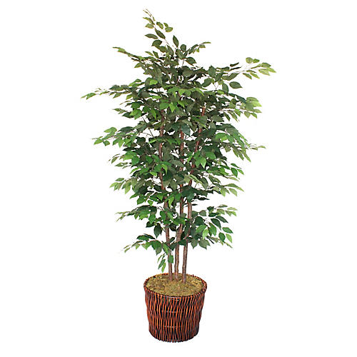 "90"" Ficus Tree w/ Basket, Faux"