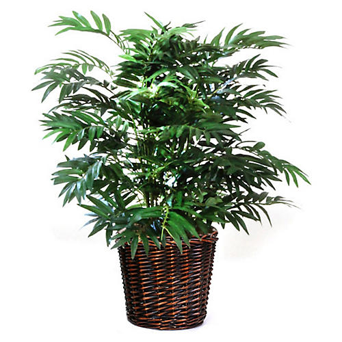 "30"" Parlour Palm w/ Basket, Faux"