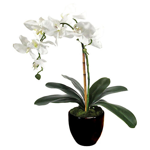 "18"" White Orchid w/ Planter, Faux"