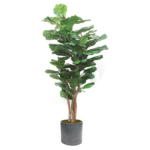 "72"" Fiddle-Leaf Fig w/ Cylindrical Planter, Faux"