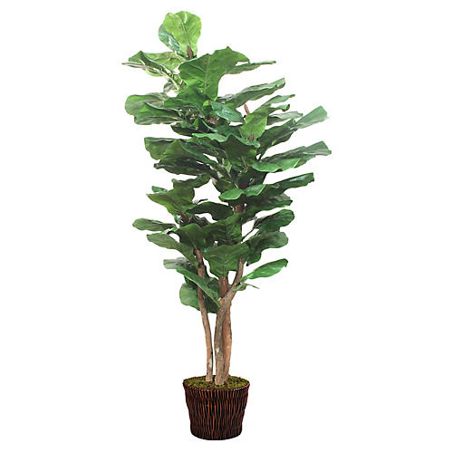 "85"" Lush Fiddle-Leaf Tree w/ Basket, Faux"