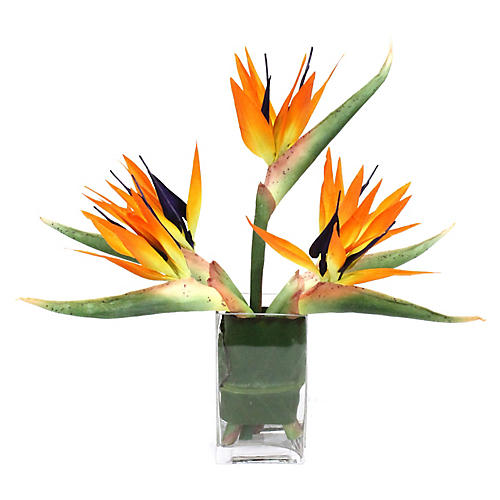 "20"" Bird-of-Paradise w/ Square Vessel, Faux"