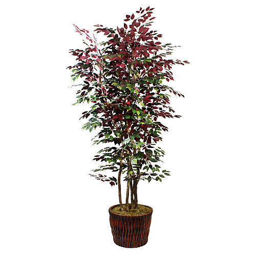 "90"" Burgundy Ficus Tree w/ Basket Planter, Faux"