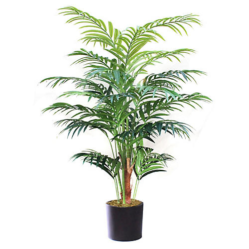 "96"" Kentia Palm Tree w/ Black Vessel, Faux"